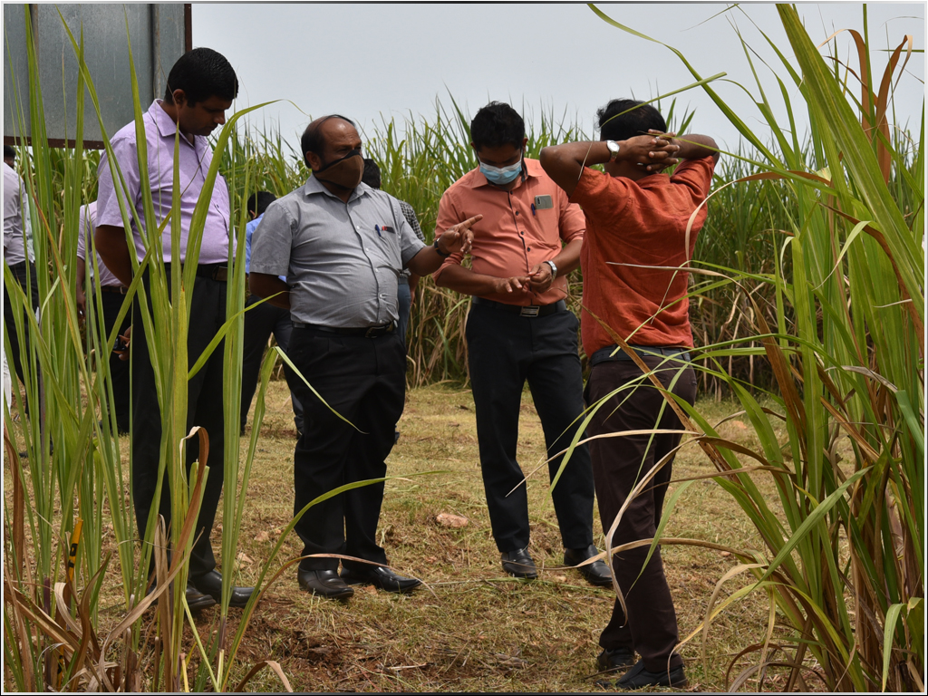 Common Forum to Find Solution for Current Issues of Sugar Sector